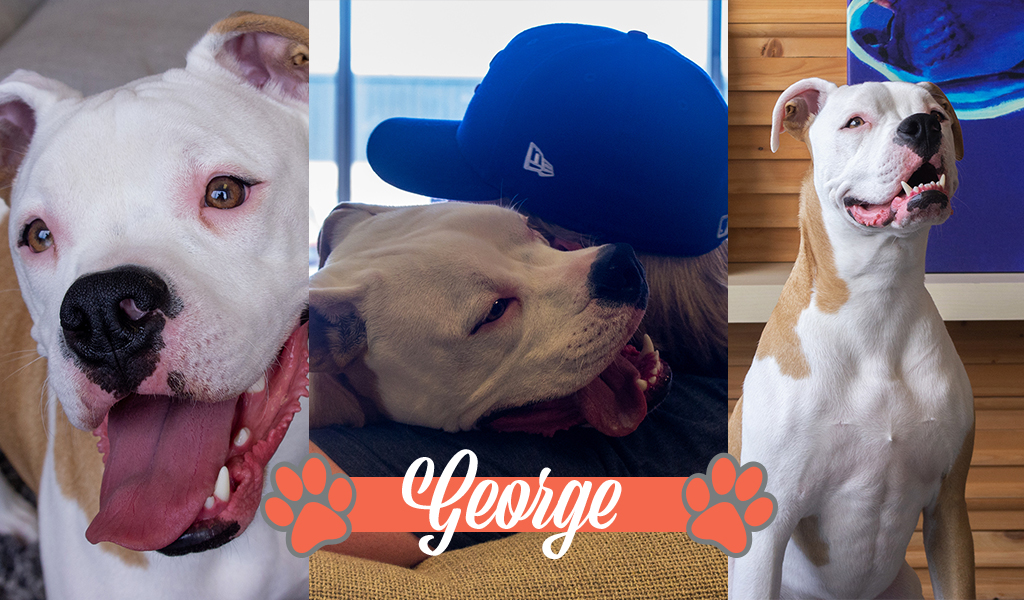 Dogs of iCanvas: George