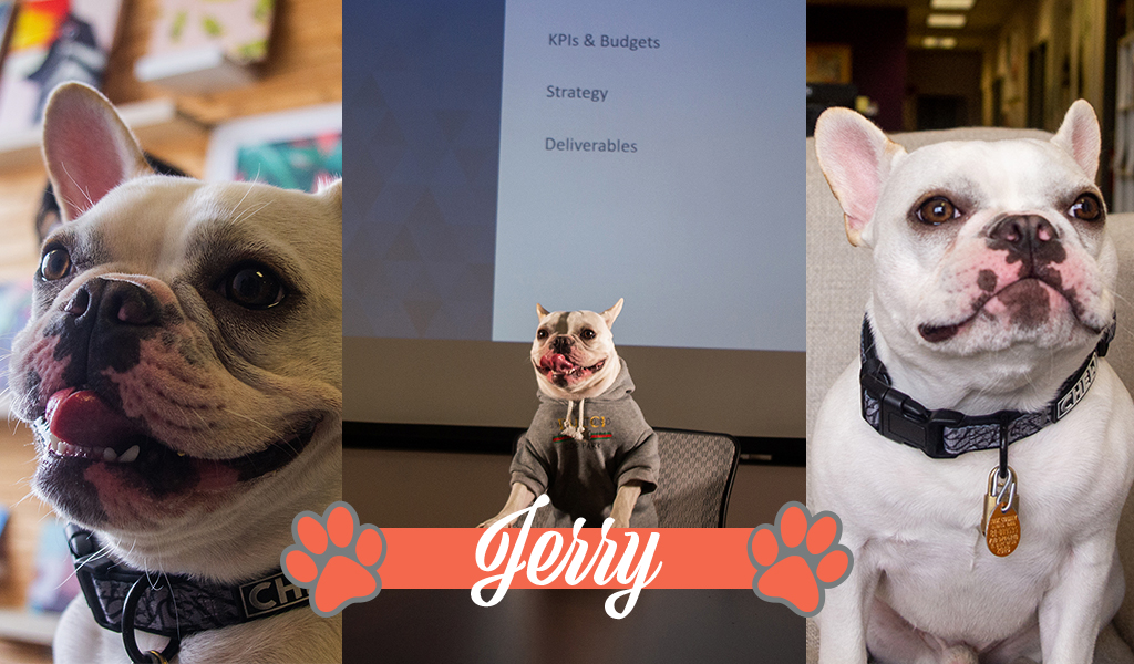Dogs of iCanvas: Jerry