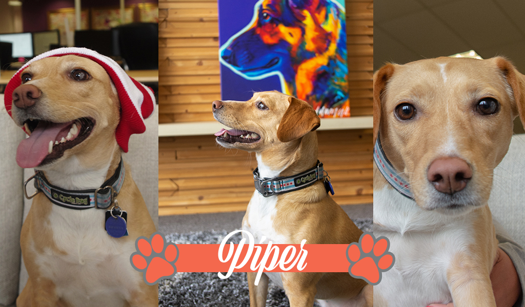 Dogs of iCanvas: Piper