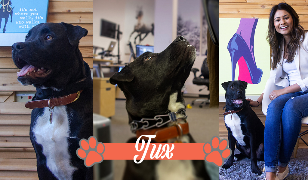 Dogs of iCanvas: Tux