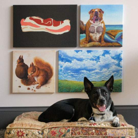Reilly, a blue heeler, lounging in front of her favorite iCanvas gallery wall.