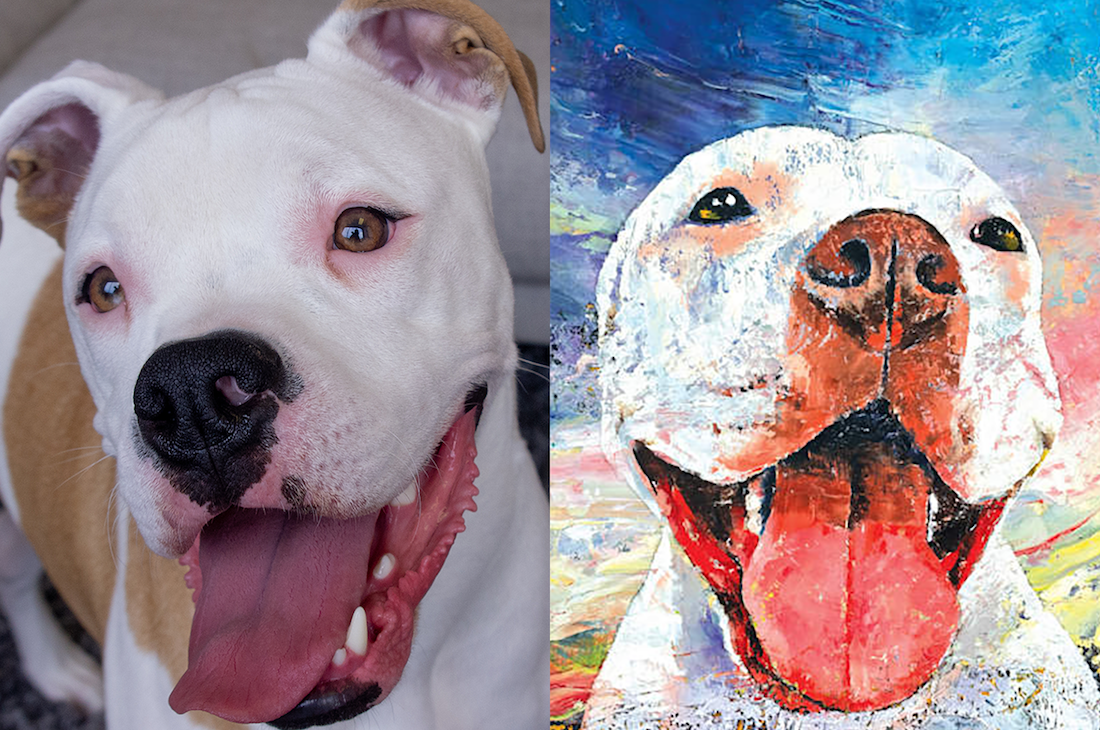 George, a mixed breed, and Michael Creese's PItbull