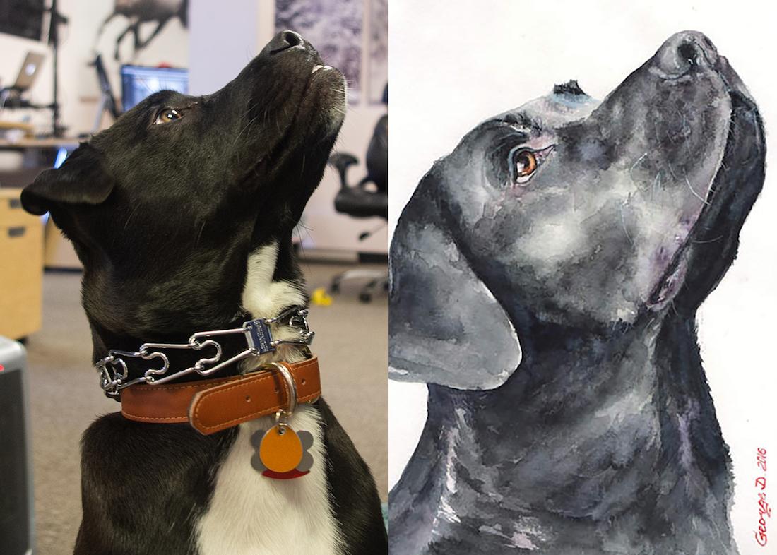 Tux, a Black Lab, and George Dyachenko's Black Labrador