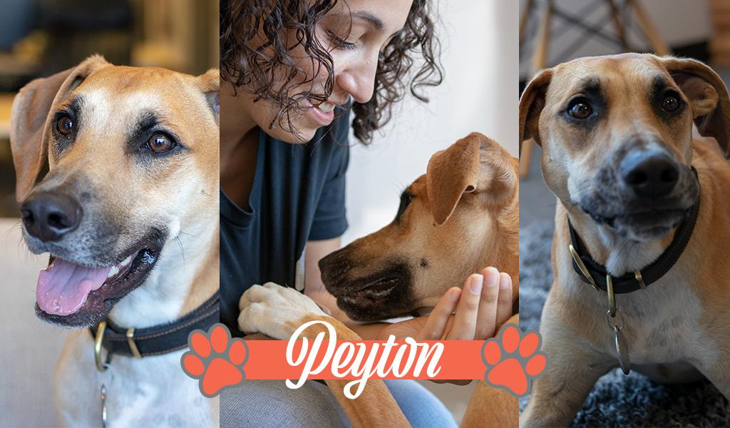 Peyton, 1, black mouth cur