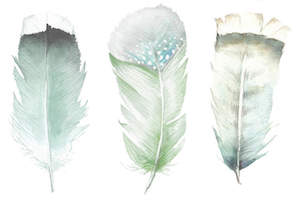 Green Feathers, Wandering Laur