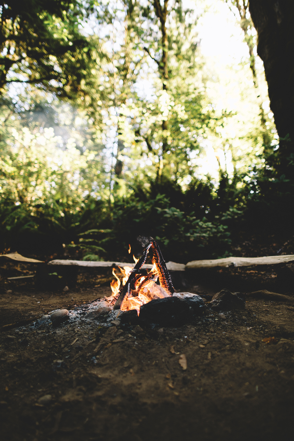 a campfire in the woods with some logs for seats