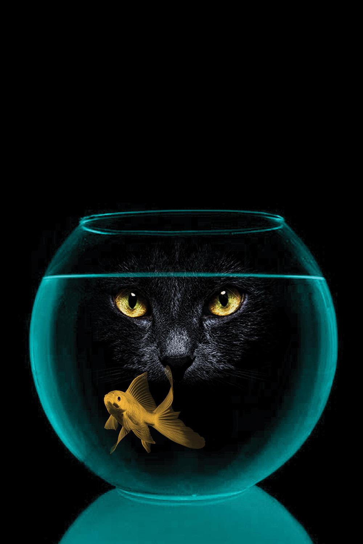 black cat staring at goldfish in fish bowl