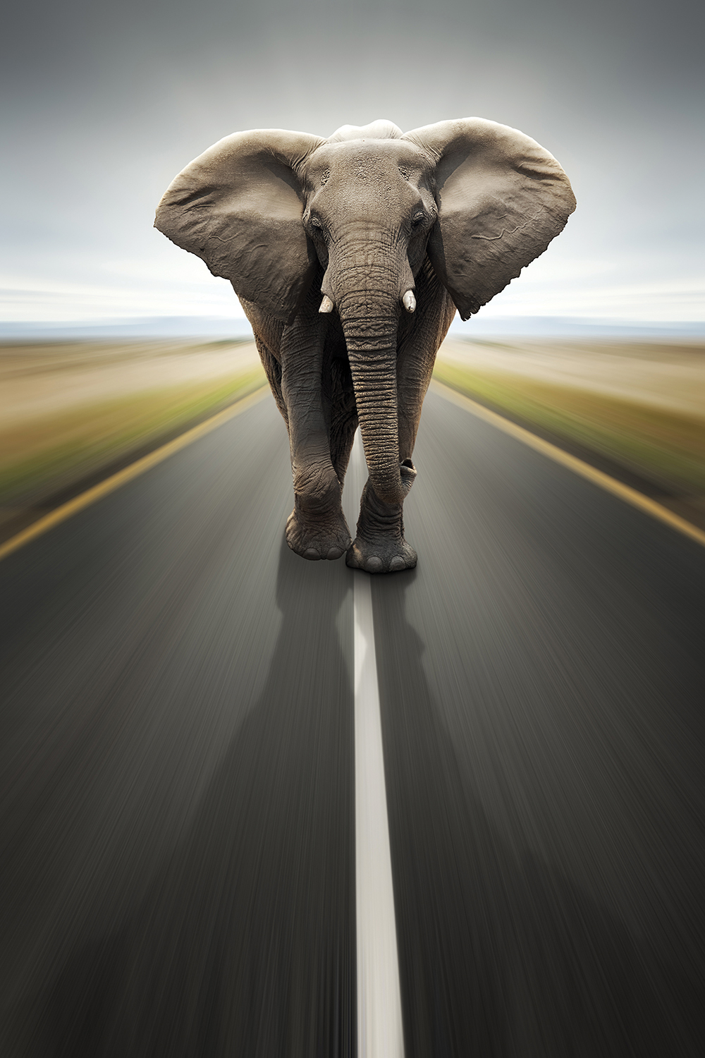 a large elephant walking towards you in the middle of a road