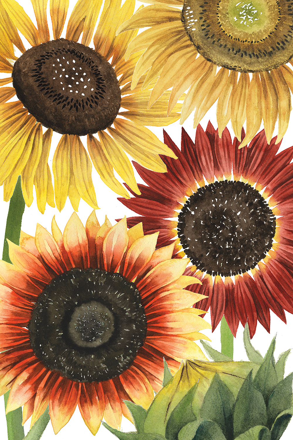 Four large sunflowers with yellow and red autumn colors