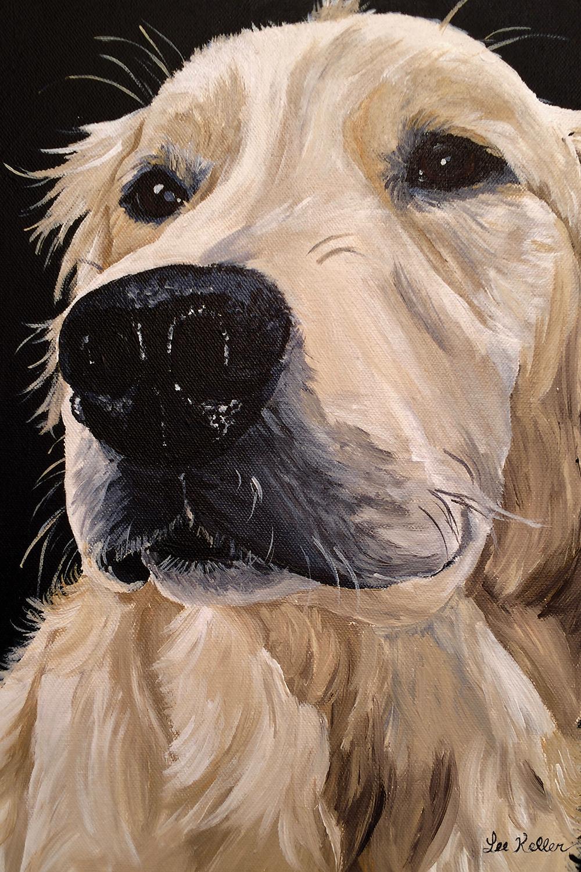 Close-up portrait of a golden retriever dog with black background