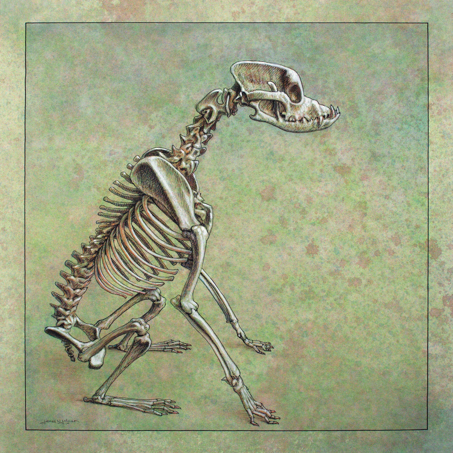Profile of a dog skeleton sitting down over a green background