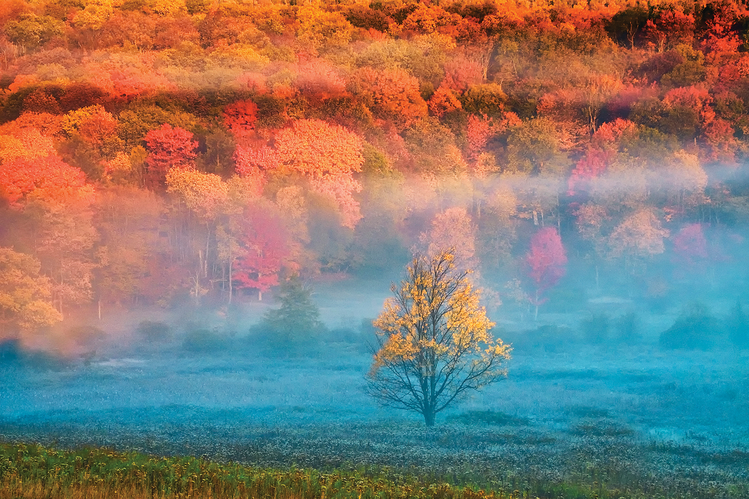 Landscape photo of single tree surrounded by forest of red and orange trees in autumn