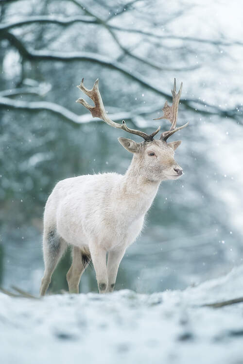 a white animal with antlers standing in a snow covered woods while it snows