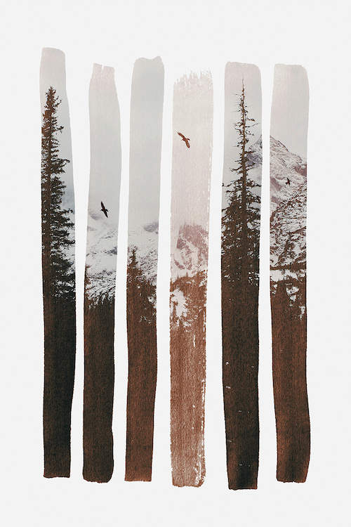 Sepia toned photo of a snowy mountain scene with tall trees and two flying birds revealed in six vertical paint stroke shapes on a white background
