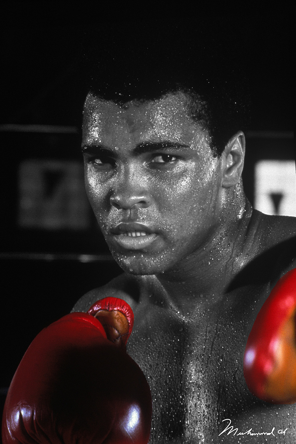 Black and white photo of Muhammad Ali with red boxing gloves in a boxing stance