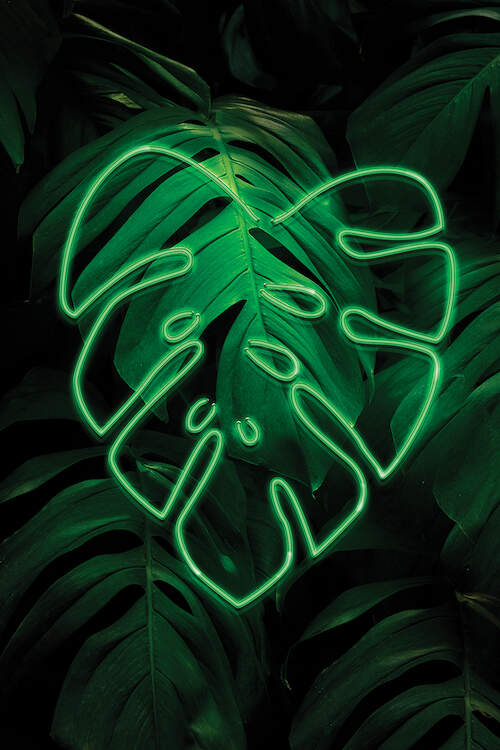 A graphic of a cluster of tropical leaves with a single neon green outline of a tropical leaf on top