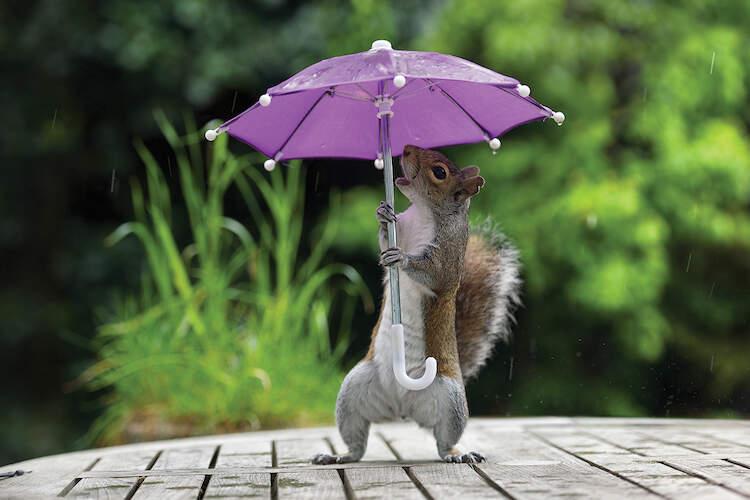 """""""Umbrella I"""" by Max Ellis shows a squirrel holding a mini purple umbrella."""