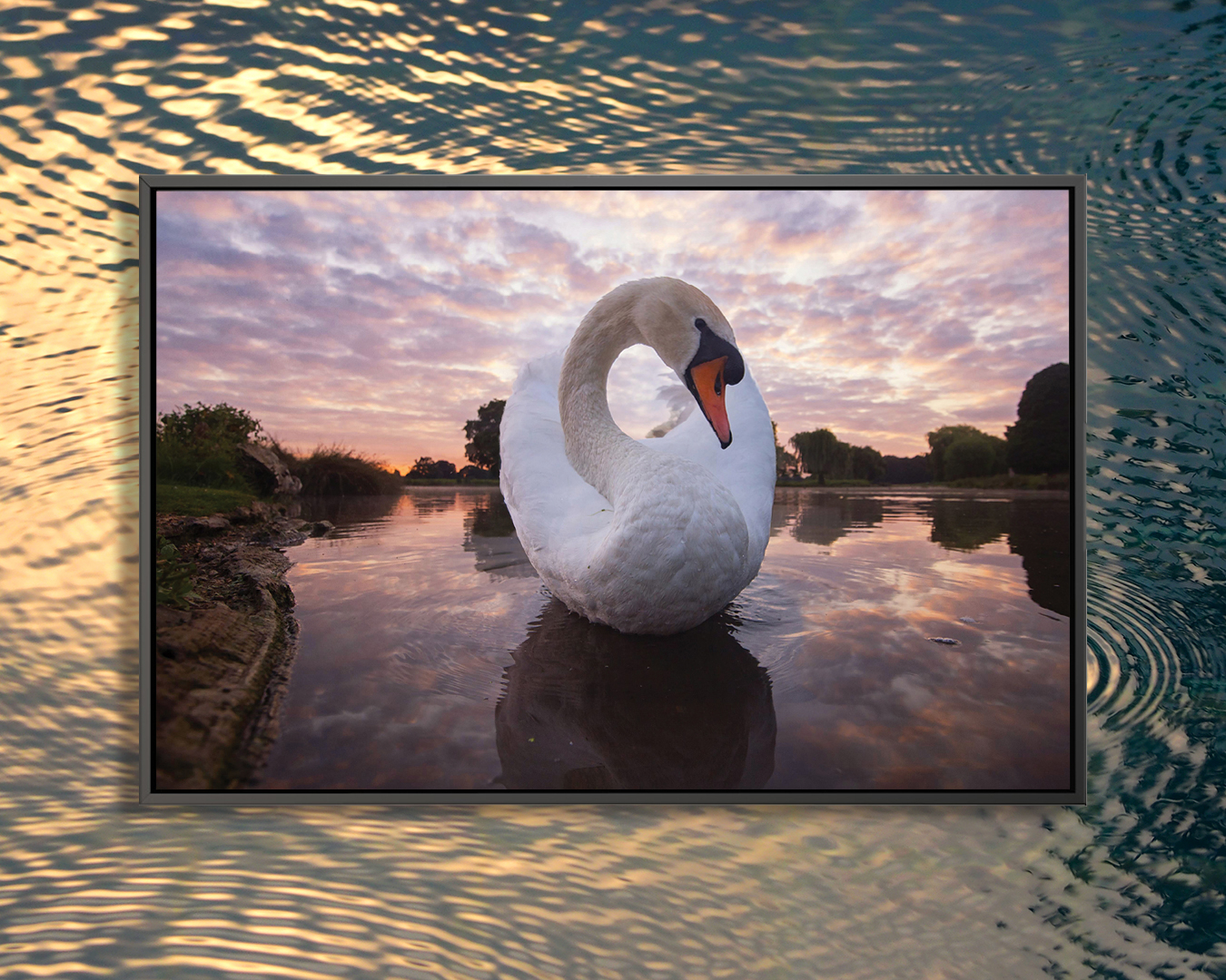 """""""Ying Yang Swan"""" by Max Ellis shows a swan in a lake with a cotton candy sky above it."""
