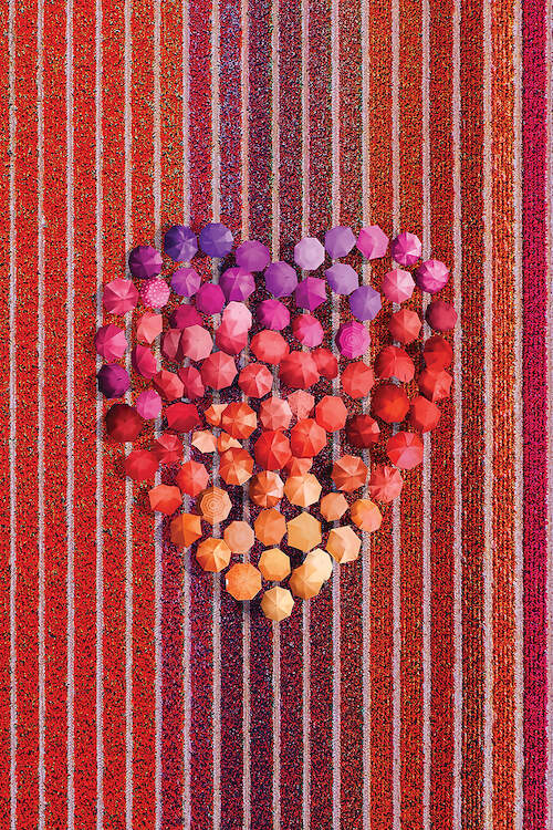 """""""Umbrellas At Tulips Field"""" by Hobopeeba shows an aerial view of pink, purple, red, and orange umbrellas making the shape of a heart in a red field of tulips."""