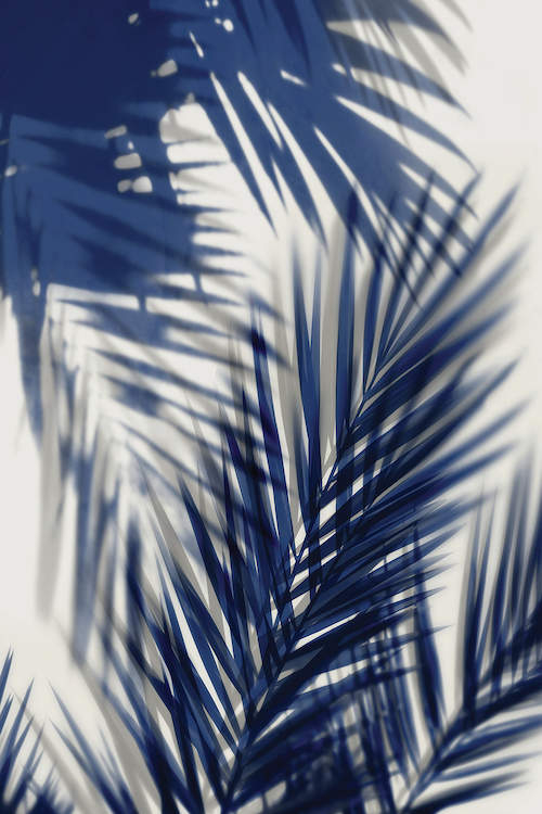 """Palm Shadows Blue II"" by Melonie Miller shows blue palm leaves and their shadows against a white background."