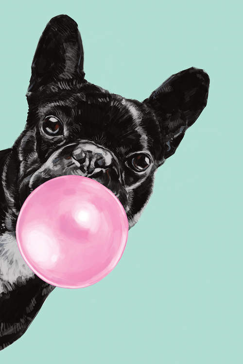 """Sneaky Bulldog Blowing Bubble Gum in green"" by Big Nose Work shows a portrait of a black french bulldog blowing pink bubblegum against a green background."