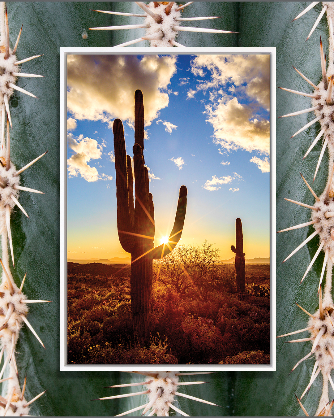 Cactus at sunrise by iCanvas artist Susanne Kremer