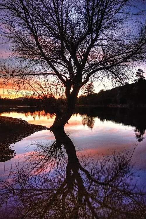 Tree reflection in lake at sunset by iCanvas artist Bob Larson
