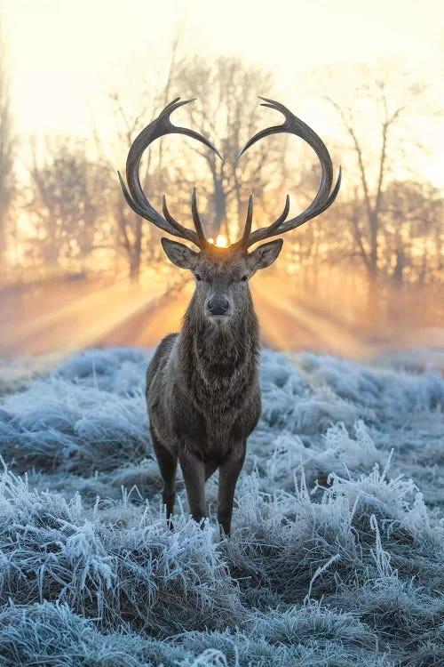 Deer in front of sunrise by iCanvas artist Max Ellis