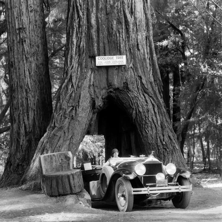 Black and white photograph of woman driving under Sequoia tree in California by iCanvas artist Vintage Images