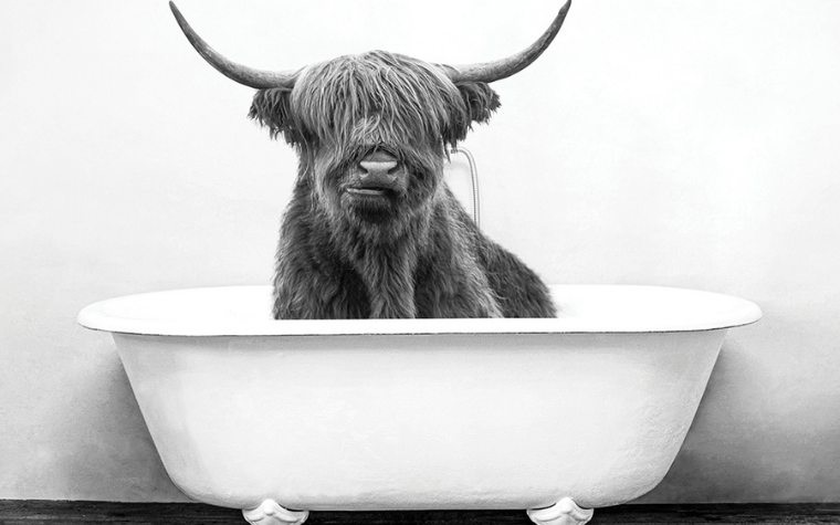Black and white walll art of a highland cow in a bathtub by iCanvas artist Amy Peterson