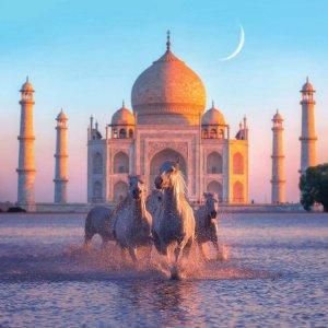 Virtual escpaism wall art featuring horses running in front of Taj Mahal at sunset