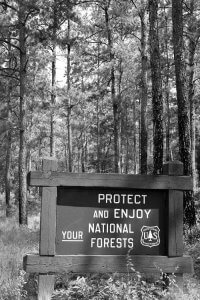 Black and white photograph of sign reading Protect and Enjoy Your National Forests in front of Wooded Area by Vintage Images