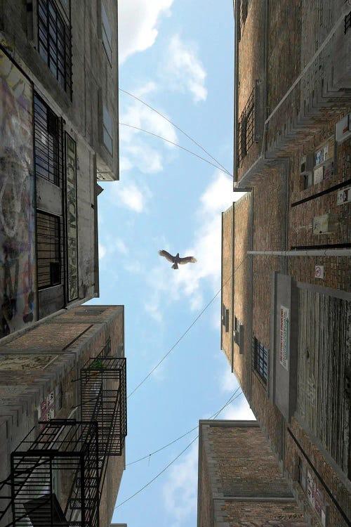 Surreal art of hawk flying between buildings by new icanvas creator Cynthia Decker