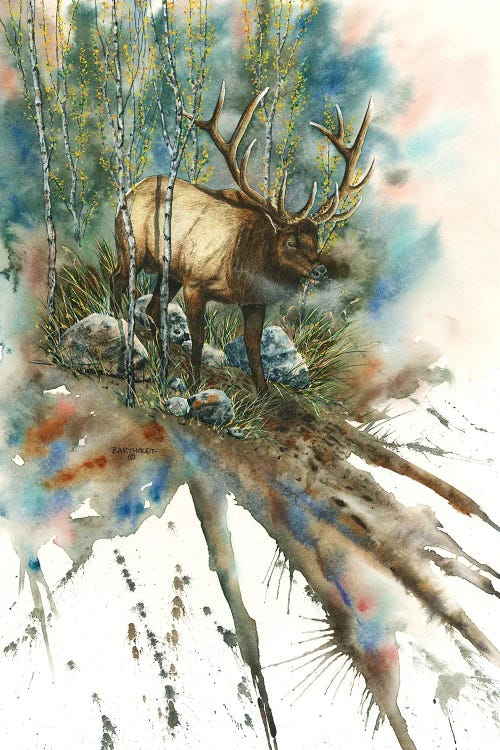 Wildlife art of an Elk in forest by new icanvas creator Dave Bartholet