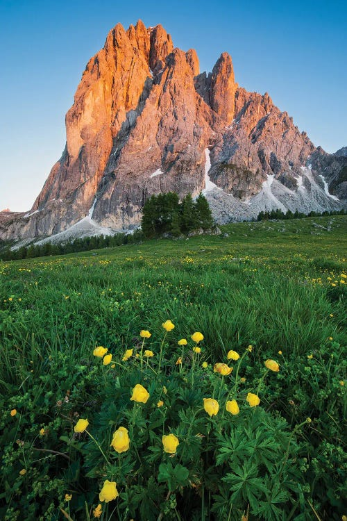 Nature photography of Dolomite mountains in front of green and yellow flowered field by new creator Mauro battistelli